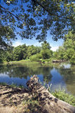 clinton jeziora dzikiej przyrody obraz stock
