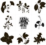 Clip art, black objects on a white background. The branches of the Ginkgo, barberry, bird cherry, clover, bamboo, a morning glory Royalty Free Stock Photography