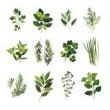 Clip art culinario común de las hierbas Foto de archivo libre de regalías