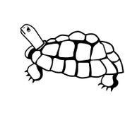 Clip art del diseño de la tortuga Fotografía de archivo