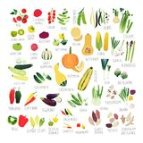 Clip art vegetable collection stock illustration