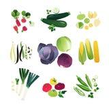 Clip art vegetables set. With radish, zucchini, physalis, beans, cabbage, corn, leek onion, tomato and okra vector illustration