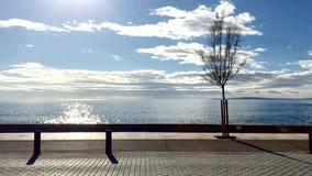 Clip del movimento lento della vista dell'albero e della spiaggia di inverno archivi video