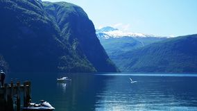 Clip of seagulls and a drone in the air over the fjord at Valldal, Norway on a sunny day with snow on the peaks of mountains. stock footage