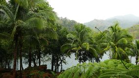 Tropical forest rain. A clip from Siaton tropical forests surrounding Lake Balanan, under heavy rain stock video