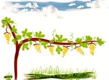 Clipart av en vingård Royaltyfria Foton