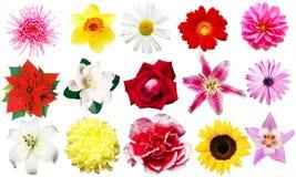 Clipart blommor Royaltyfri Fotografi