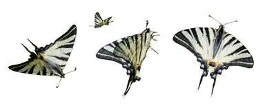 Clipart butterfly Royalty Free Stock Image
