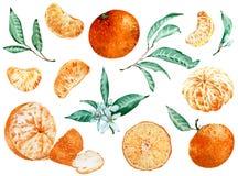Clipart da tangerina isolado no fundo branco Projeto tropical Ilustra??o da aguarela fotos de stock royalty free