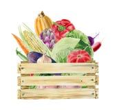 Clipart de la acuarela de verduras en caja Fotos de archivo