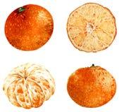 Clipart del mandarino isolato su fondo bianco Illustrazione tropicale Frutta Illustrazione dell'acquerello fotografia stock