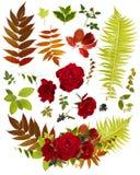 Clipart del mazzo del fiore di Rosa con le singole foglie Fotografia Stock