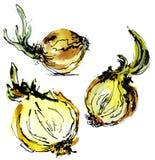 Clipart dell'alimento dell'acquerello Insieme dell'acquerello delle verdure Cipolle disegnate a mano isolate Fotografie Stock