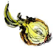 Clipart dell'alimento di schizzo dell'acquerello cipolle Fondo con le cipolle disegnate a mano isolate Immagine Stock Libera da Diritti