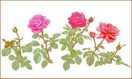 Clipart delle rose Immagine Stock