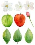Clipart do vetor da maçã da aquarela Fotos de Stock