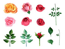 Clipart do vetor das rosas da aquarela Fotografia de Stock
