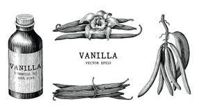 Clipart do vintage da tração da mão da coleção da baunilha isolado no branco ilustração royalty free