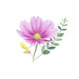 Clipart floral de la acuarela hermosa aislado Imagen de archivo libre de regalías