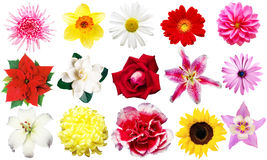 Clipart flowers. On the white background royalty free stock photography
