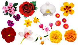 Clipart flowers. On the white background stock photo