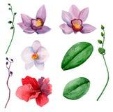 Clipart havaiano do vetor das flores Fotografia de Stock