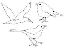 Clipart (images graphiques) à main levée de trois oiseaux Images libres de droits