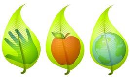 Clipart (images graphiques) environnemental de lame verte Photo stock
