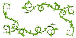 Clipart (images graphiques) feuillu vert de vignes Images libres de droits