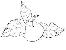 Clipart a mano libera, disegno di Apple con le foglie Fotografie Stock Libere da Diritti