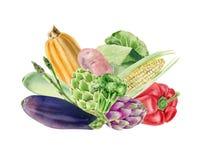 Clipart peint à la main d'aquarelle avec les légumes frais Photographie stock libre de droits