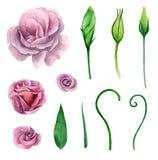 Clipart roxo do vetor das flores Fotografia de Stock