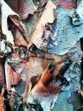Clipart variopinto di struttura della corteccia di albero Immagine Stock