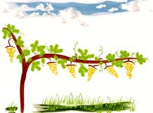 Clipart of a vineyard Royalty Free Stock Photos