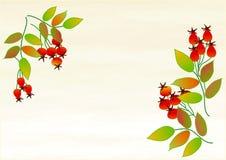 Clipart z różanymi jagodami Zdjęcia Royalty Free