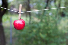 Cliped rött äpple Fotografering för Bildbyråer