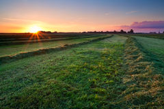 Clipped hay on grassland at sunrise Stock Image