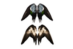 Clipped real duck wings on white background isolated back front angel four two pairs Stock Images