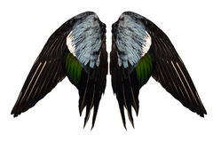 Clipped real duck wings on white background isolated front angel two pair.  Royalty Free Stock Images