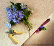 Clipped with shears bouquet on  table Stock Photos