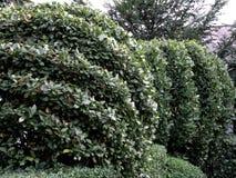 Clipping bush fence Stock Photos