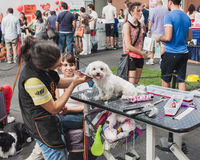 Clipping a dog at Quattrozampeinfiera in Milan, Italy Royalty Free Stock Photos
