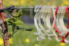 Clips for a raspberry plantation Royalty Free Stock Images