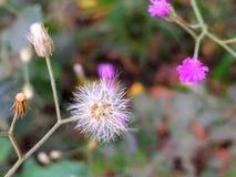 Clique macro da flor pequena imagem de stock royalty free
