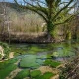 Clitunno flod i Umbria Italy Royaltyfri Bild