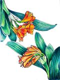 Clivia mirrored 2. Clivia mirrored 3 markers drawings 2/3 triptych Royalty Free Stock Image