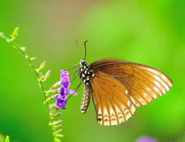 Cloce-up Butterfly Stock Photography