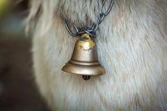 Cloche-cou d'une chèvre images libres de droits