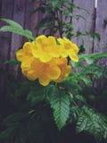 Cloches jaunes image stock