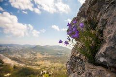 Cloches monténégrines Parc national de Lovcen Images stock